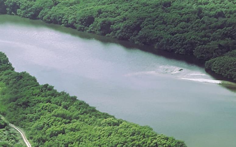 SEMA realiza oficina virtual de diagnóstico socioambiental da Bacia Hidrográfica do Rio Cocó e do Plano de Manejo do Parque Estadual do Cocó